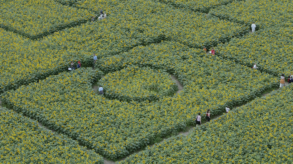 Visitors walk inside a labyrinth made of 600,000 sunflowers near the village of Storkow, about 50 km (31 miles) east of Berlin, July 24, 2004